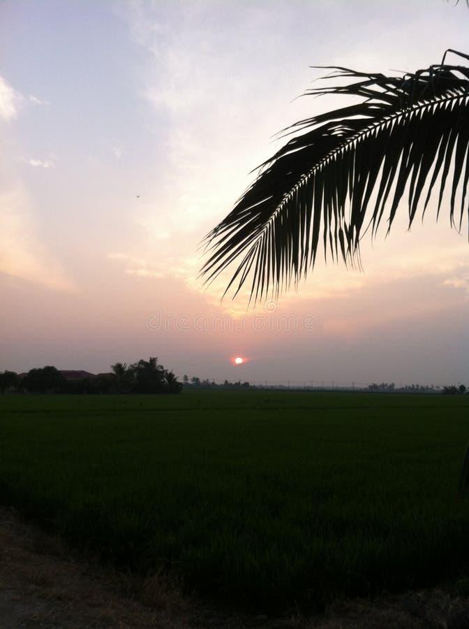 Sonnenuntergang an Reisfeld 2 lizenzfreies stockfoto