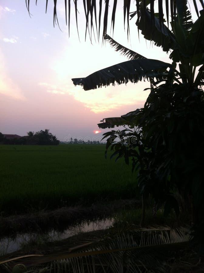 Sonnenuntergang an Reisfeld 1 stockbilder