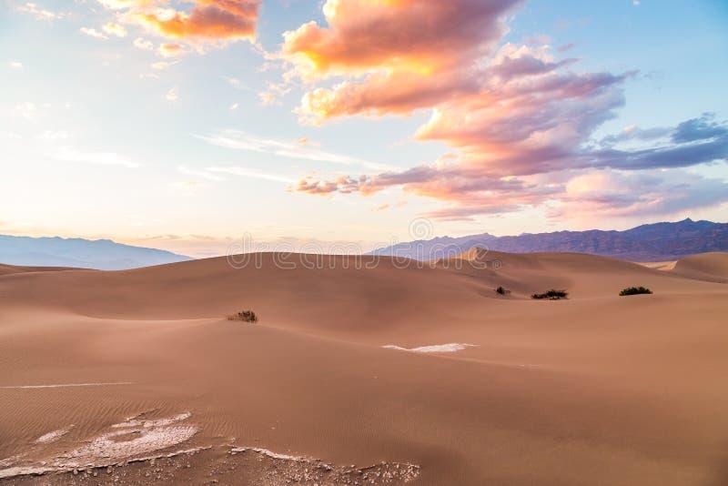 Sonnenuntergang Süßhülsenbaum-an den flachen Sanddünen in Nationalpark Death Valley, Kalifornien, USA lizenzfreie stockbilder