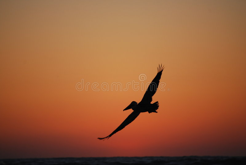Sonnenuntergang in Sanibel stockfotos