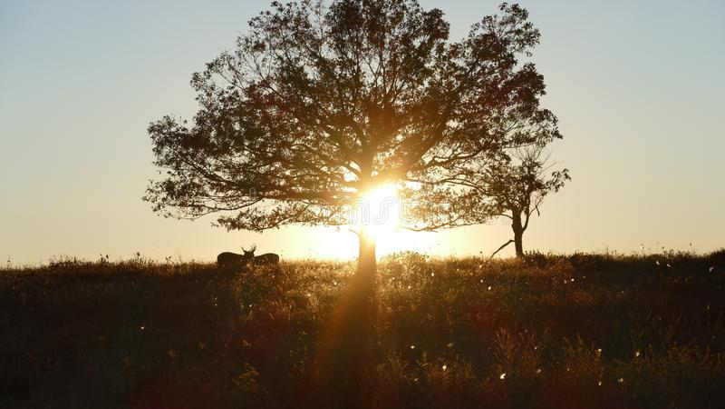Sonnenuntergang in Shenandoah mit silhouet von zwei Rotwild stockbilder