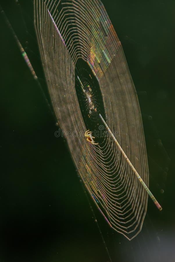 Sonnenuntergang-Spinnen-Netz-Reflexionen stockfotos