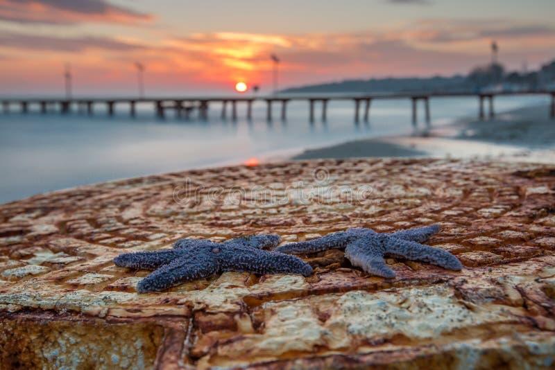 Sonnenuntergang Starfish Tekirdag, die Türkei lizenzfreie stockfotografie