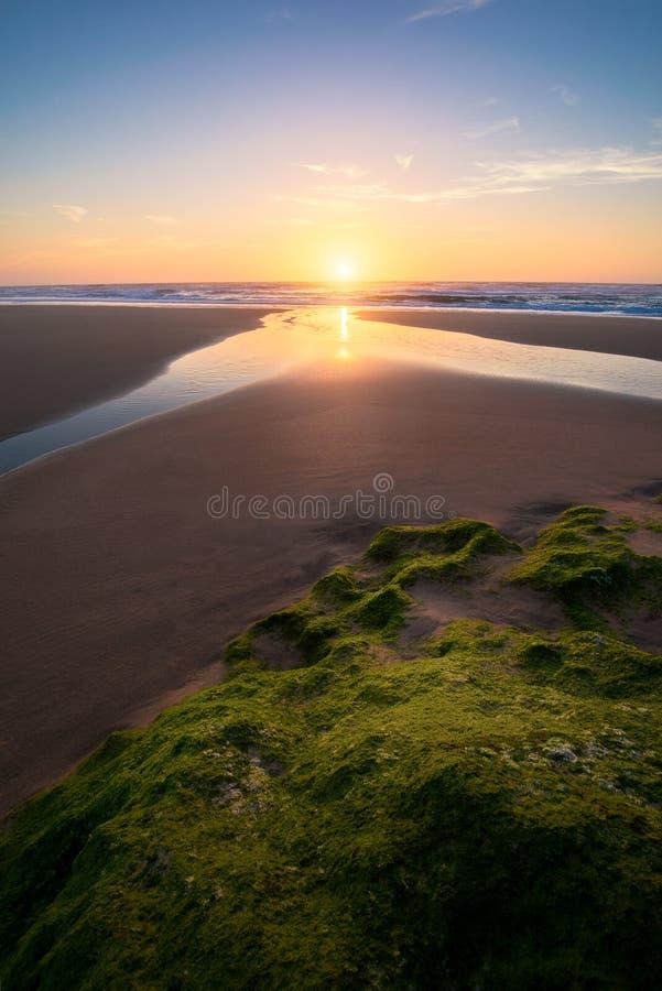 Sonnenuntergang am Strand, grünes Moos auf dem Stein am Strand in Algarve, Portugal Schöner Felsenstrand mit grünem Moos und Meer lizenzfreies stockfoto