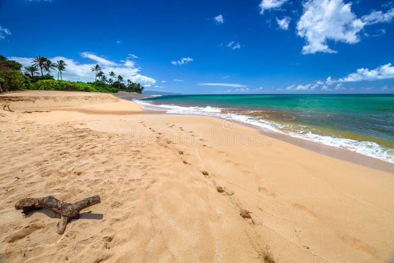 Sonnenuntergang-Strand Oahu stockfotos