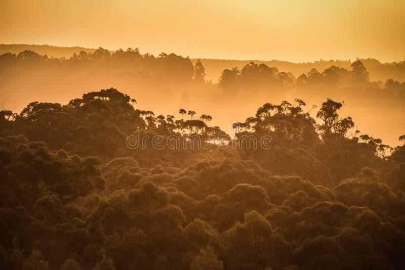Sonnenuntergang in Tasmanien-` s Huon Valley lizenzfreie stockbilder