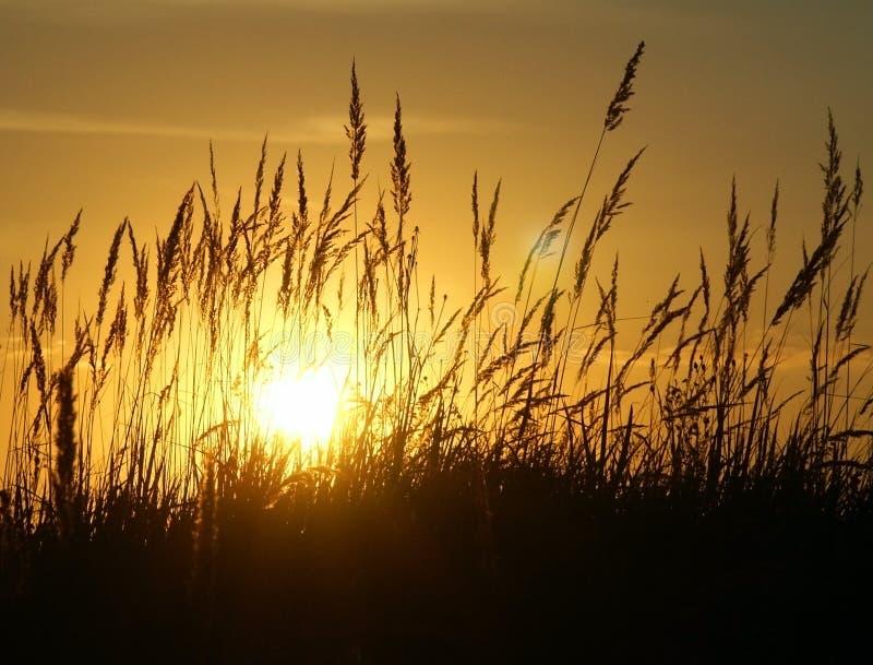 Sonnenuntergang u. Gras lizenzfreies stockfoto
