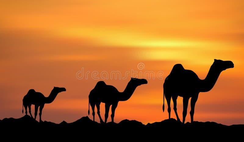 Sonnenuntergang u. Kamele lizenzfreie abbildung