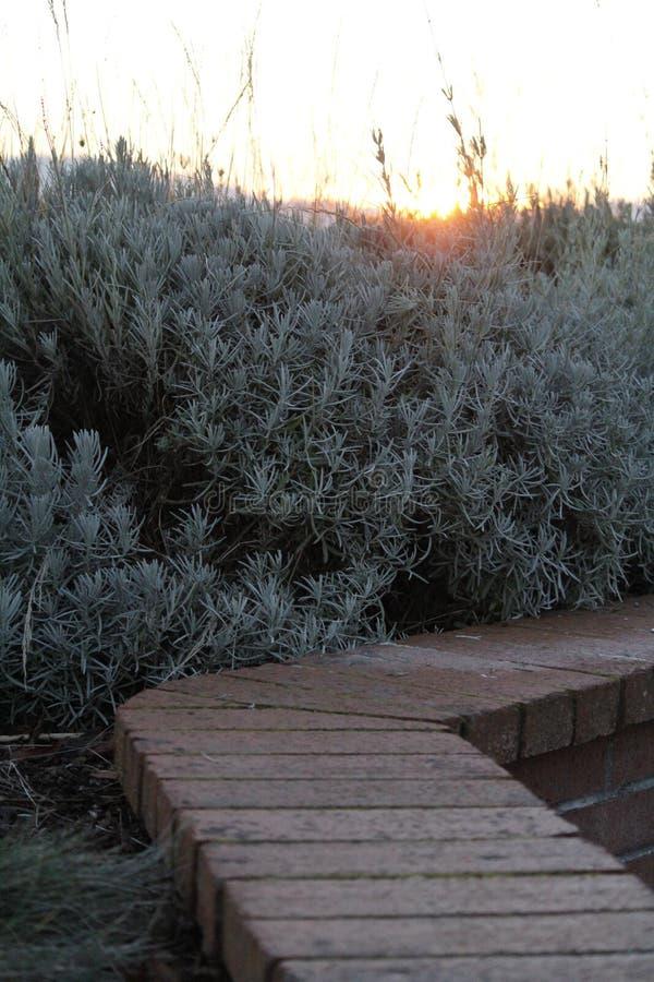 Sonnenuntergang und Busch stockfotografie