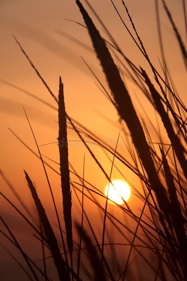 Sonnenuntergang und Dünegras lizenzfreie stockfotos