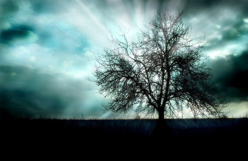 Sonnenuntergang und ein Baum stockbilder