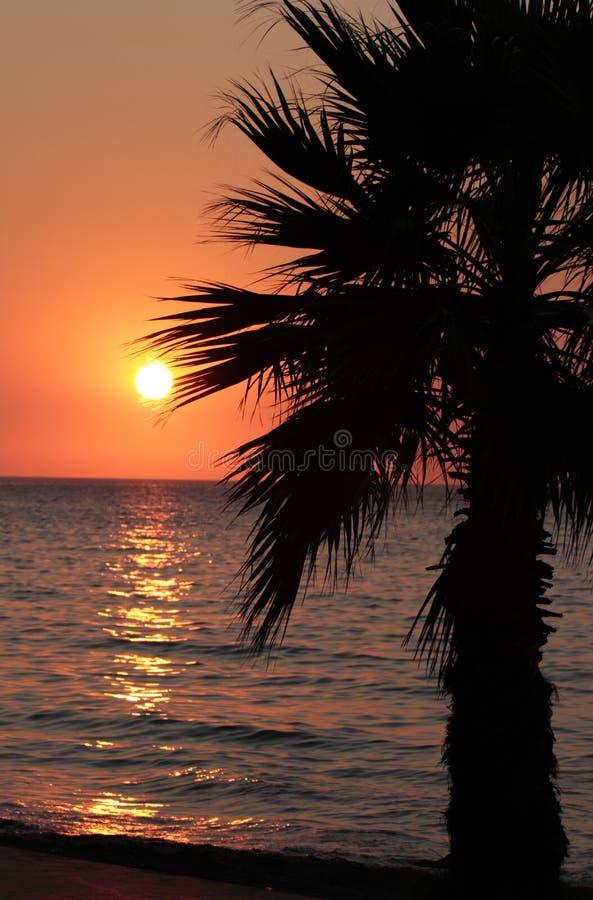 Download Sonnenuntergang- und Palme stockbild. Bild von feiertag - 26362505