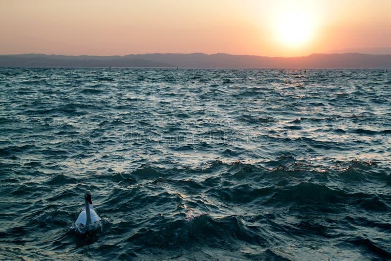 Sonnenuntergang und Schwan See Garda stockfotos