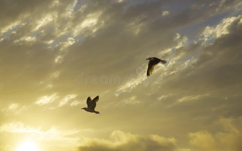 Sonnenuntergang und Seemöwen stockbild