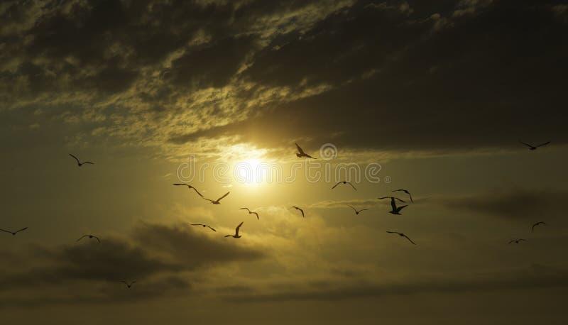 Sonnenuntergang und Seemöwen stockfoto