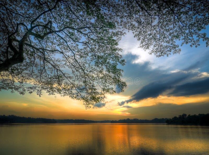 Sonnenuntergang unter Ast lizenzfreies stockbild
