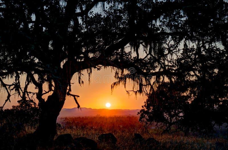 Sonnenuntergang unterhalb der Niederlassung einer Eiche lizenzfreie stockfotos