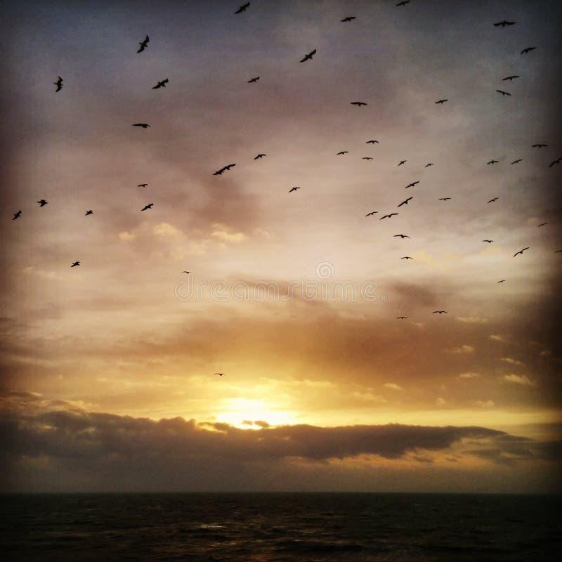 Sonnenuntergang-Vogel-Küsten-Ozean-Wolken lizenzfreies stockfoto