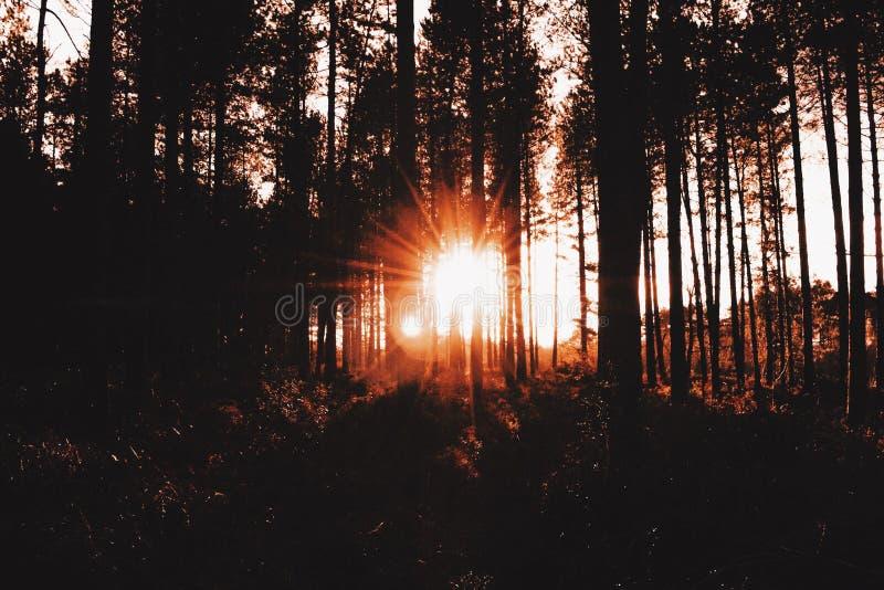 Sonnenuntergang-Wald stockbild