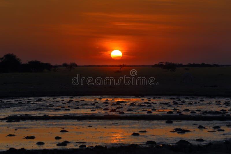 Sonnenuntergang am waterhole lizenzfreie stockfotos