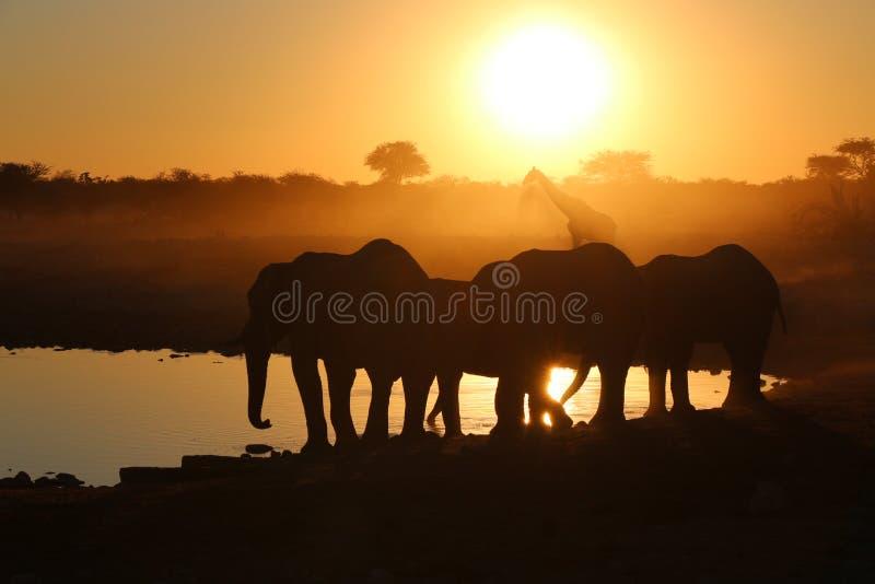 Sonnenuntergang am waterhole stockfotografie