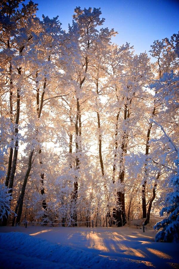 Sonnenuntergang-Wintermärchenland lizenzfreie stockbilder