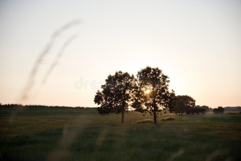 Sonnenuntergangabflussrinnenbäume in Schalkwijk stockbild