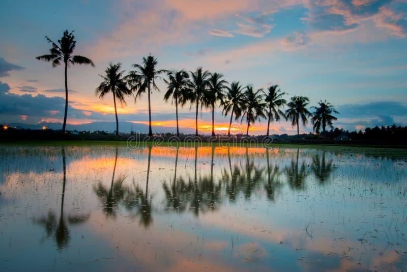 Sonnenuntergangansicht von Kokosnussbäumen stockfotos