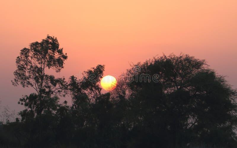 Sonnenuntergangansicht zwischen Baum lizenzfreie stockbilder