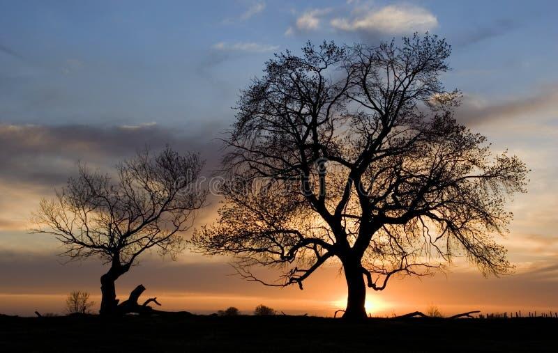 Sonnenuntergangbäume stockbilder