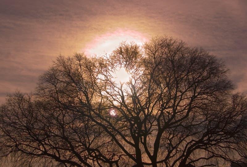 Sonnenuntergangbaum stockfotos