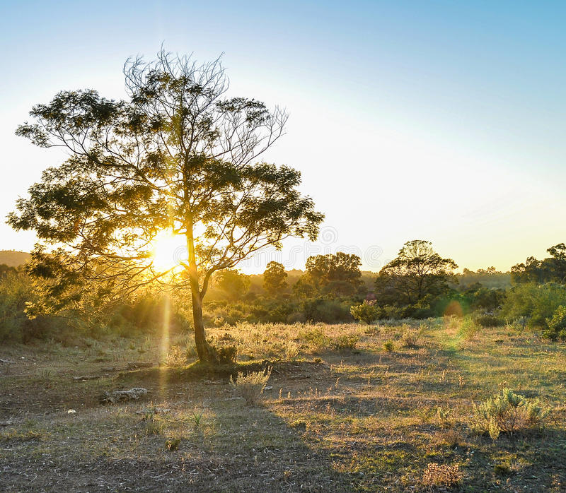 Sonnenuntergangbaum stockfoto