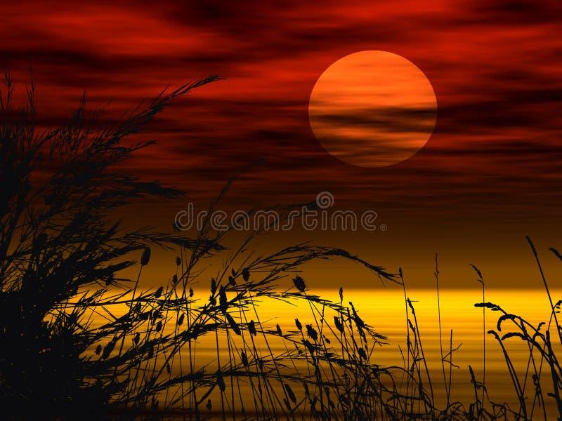 Sonnenuntergangblumenhintergrund lizenzfreie abbildung