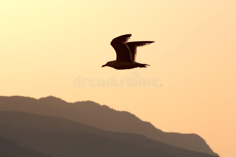 Sonnenuntergangflug lizenzfreie stockfotografie
