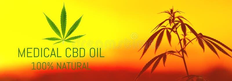 Sonnenunterganghanffeld Marihuana-Anlagen CBD-Öl-Hanfauszug, medizinisches Konzept lizenzfreie abbildung