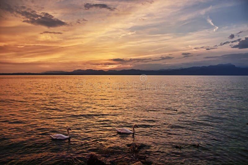 Sonnenuntergangidylle am See mit Schwänen im Sommer lizenzfreie stockbilder