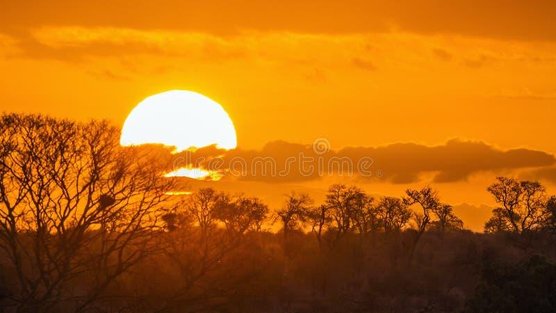 Sonnenunterganglandschaft in Nationalpark Kruger, Südafrika stockbild