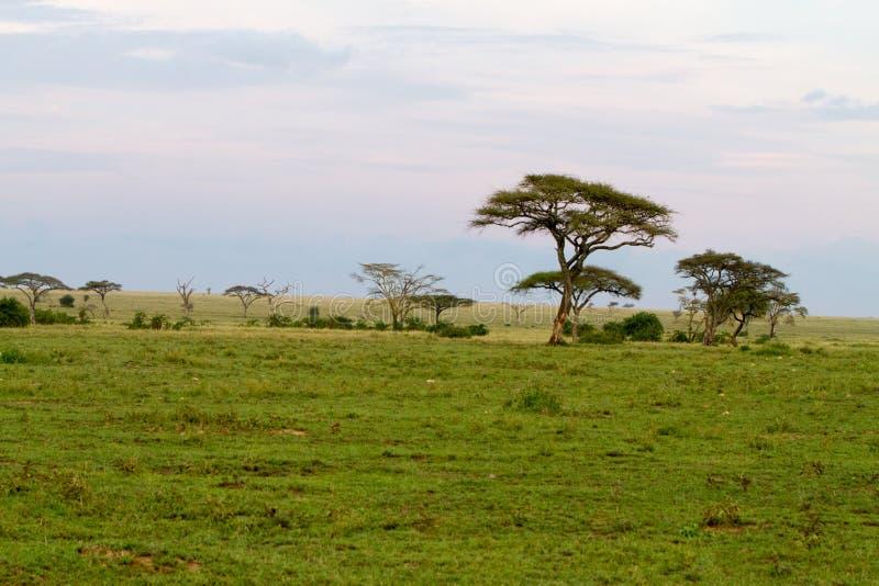 Sonnenunterganglandschaft in Nationalpark Serengeti lizenzfreies stockbild