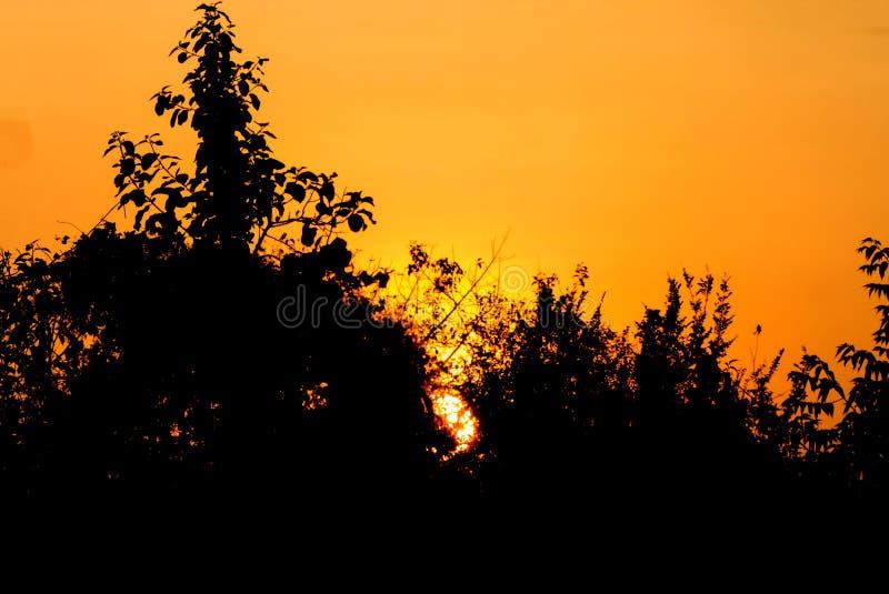 Sonnenuntergangnaturschönheit haben Baumschattenbild in der Stadt stockfotografie