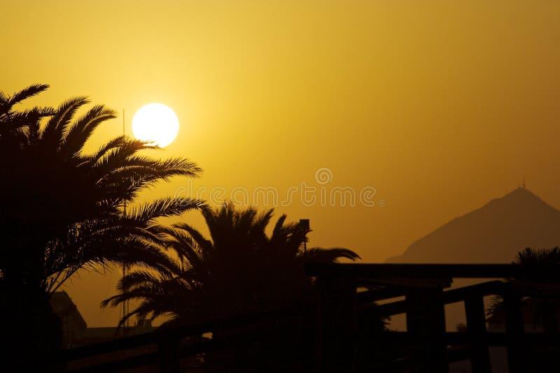Sonnenuntergangpalme stockfoto