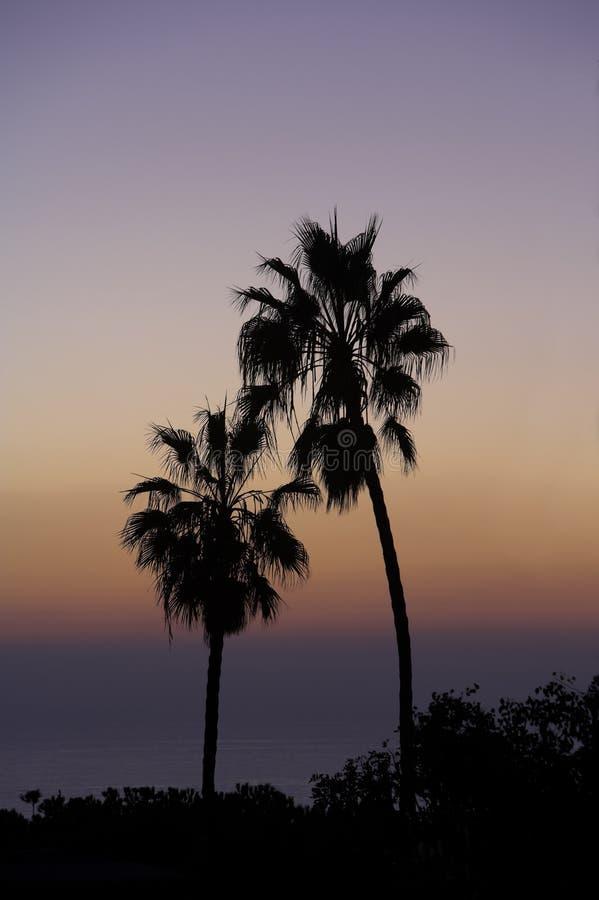 Sonnenuntergangpalmen lizenzfreies stockfoto