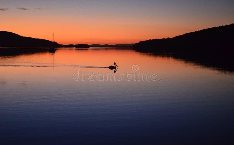 Sonnenuntergangpelikanreflexion lizenzfreie stockfotos