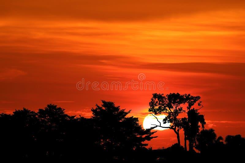 Sonnenuntergangrückseite über Schattenbildniederlassungsbaum auf dem Gebiet auf Abendhimmel stockfotos