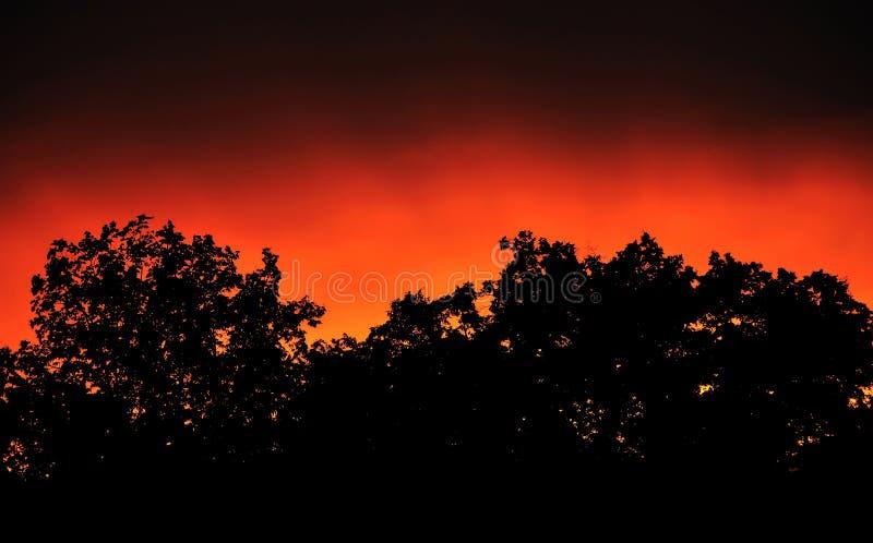 Sonnenuntergangsbaumschattenbild lizenzfreie stockfotografie