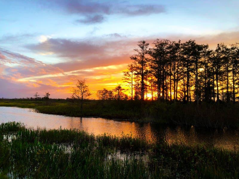 Sonnenuntergangschattenbild im Zypressensumpf stockbild