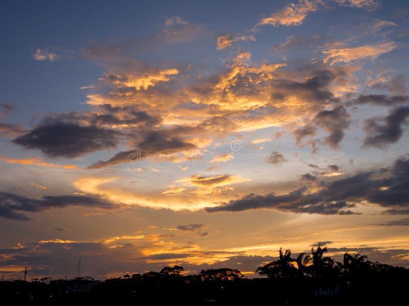 Sonnenuntergangschattenbildwald in der Stadt lizenzfreies stockfoto