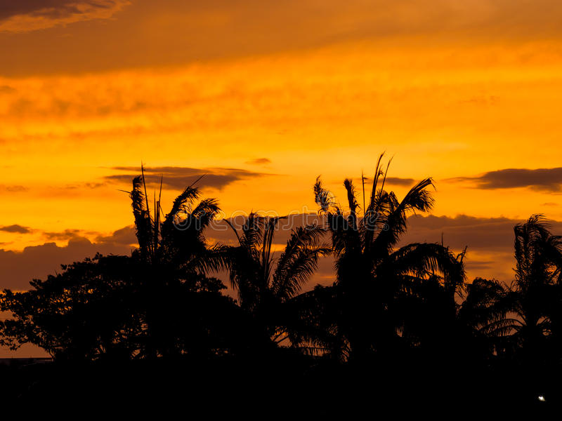 Sonnenuntergangschattenbildwald in der Stadt stockbilder