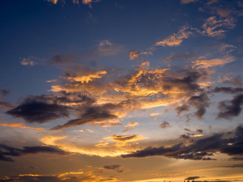 Sonnenuntergangschattenbildwald in der Stadt lizenzfreie stockfotos