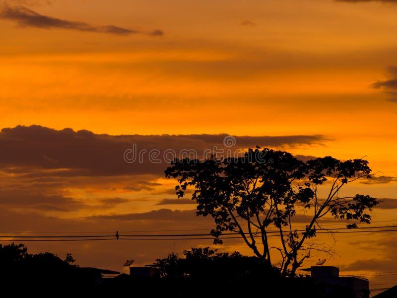 Sonnenuntergangschattenbildwald in der Stadt stockfotos