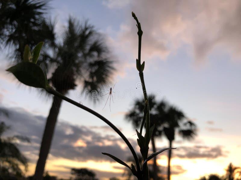 Sonnenuntergangspinnen stockbilder